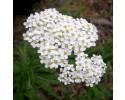 Håndcreme til klatrere af lækre planter fra Climbskin